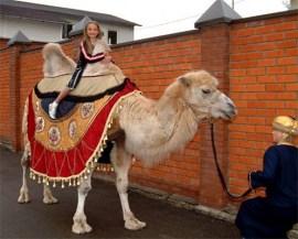 Дрессированный верблюд